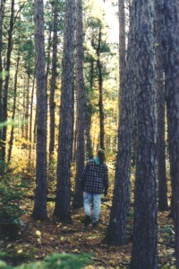 person walking in the woods