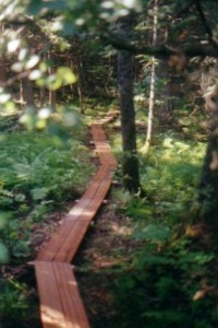 wooden sidewalk running through the woods